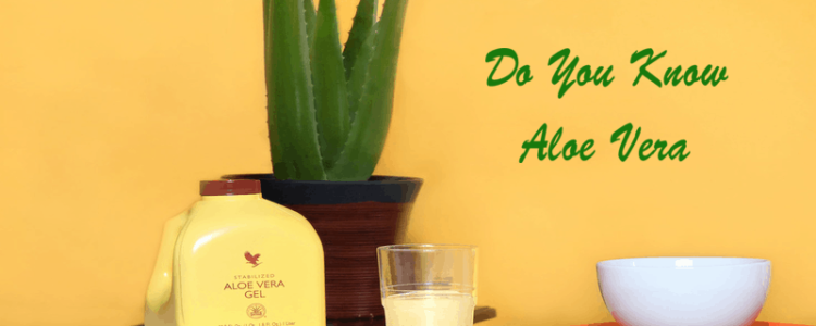 image of aloe plant in pot, a bottle of Forever Living aloe vera and a white bowl all on the table.